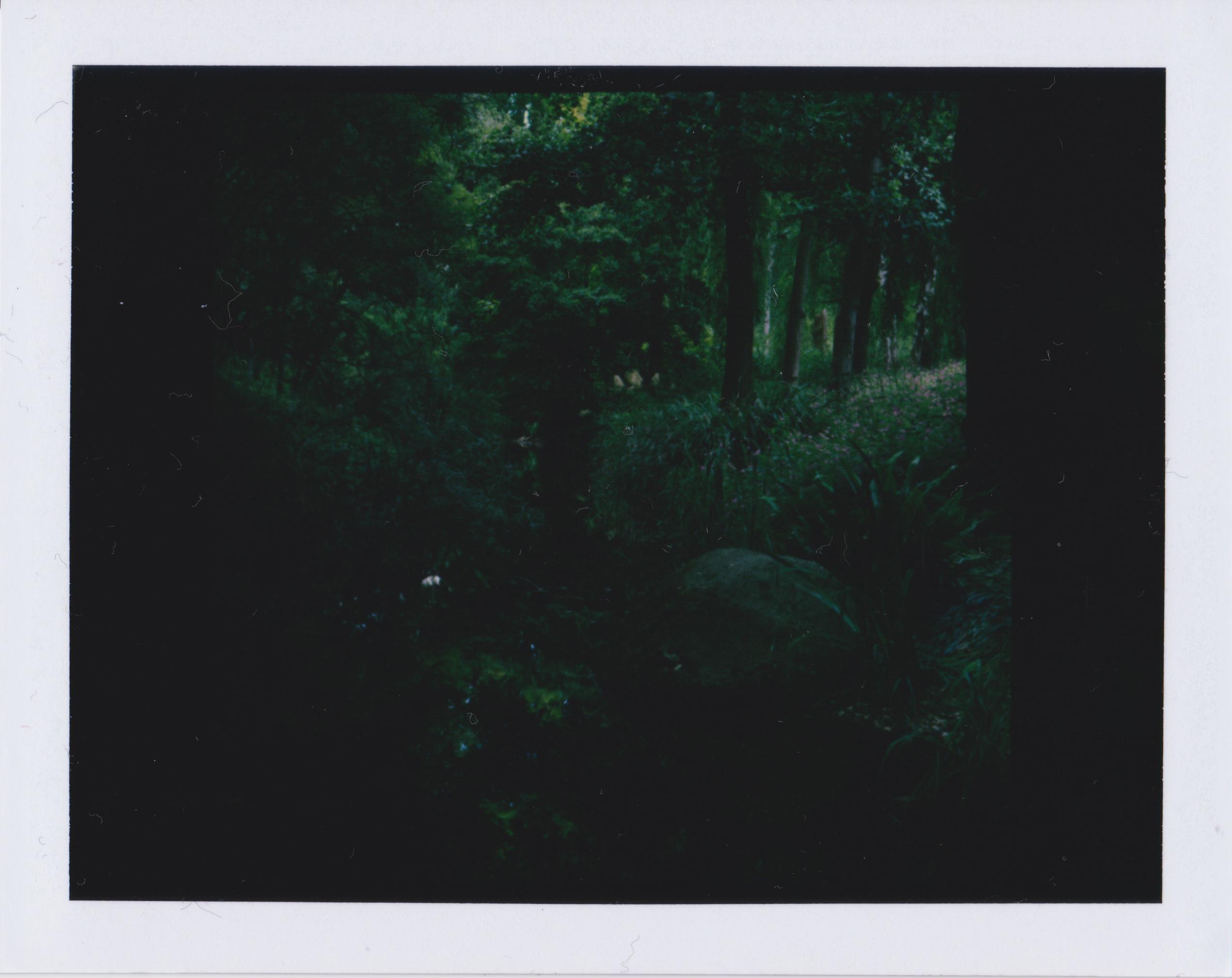 Luisenpark Mannheim Polaroid 4